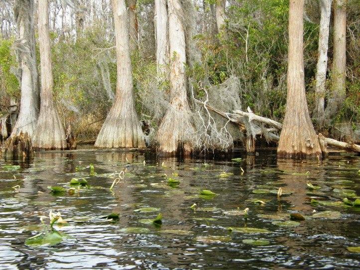 Иллюстрация на тему Болото Манчак в Луизиане - тайна смертельно опасного места
